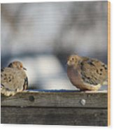 Two Mourning Doves Wood Print