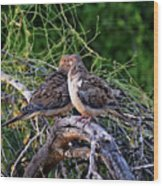 Two Mourning Doves H14 Wood Print