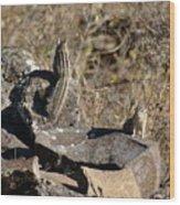 Two Munks On The Rocks Wood Print