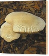 Two Mushrooms Wood Print