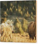 Two Mustangs Post Playtime At The Waterhole Wood Print