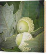 Two Oak Acorns Wood Print