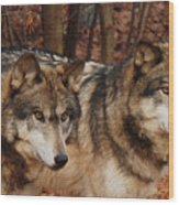 Two Of A Kind Wood Print