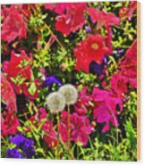 Two Of Dandelion. Floral Carpet. Wood Print