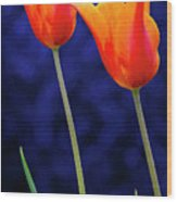 Two Orange Tulips On Blue Wood Print