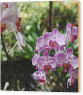 Two Orchid Branches Number One Wood Print