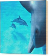 Two Pairs Of Dolphins Wood Print