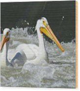 Two Pelicans At Horn Rapids Wood Print