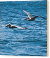 Two Pelicans Flying Wood Print