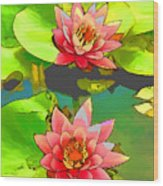 Two Pink Blooming Water Lilies  Wood Print