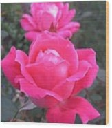 Two Pink Double Roses Wood Print