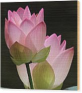 Two Pink Lotus Wood Print