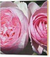 Two Pink Roses Wood Print