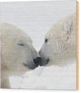 Two Polar Bears Ursus Maritimus Wood Print