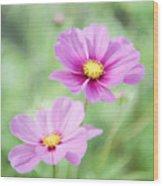 Two Purple Cosmos Flowers Wood Print