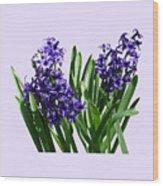 Two Purple Hyacinths Wood Print