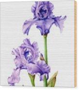 Two Purple Irises Wood Print