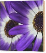 Two Purple N White Daisies Wood Print