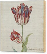 Two Red And White Tulips. Colombijn And Wit Van Poelenburg Wood Print