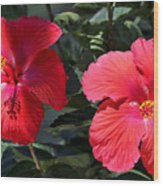 Two Red Hibiscus With Border Wood Print