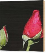 Two Red Rosebuds Wood Print