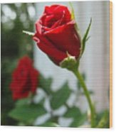 Two Red Roses Wood Print