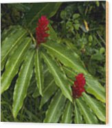 Two Red Tropical Flowers Blooming Wood Print