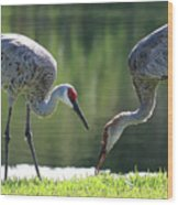 Two Sandhills By The Water Wood Print