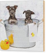 Two Scruffy Puppies In A Tub Wood Print by Susan Schmitz