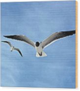 Two Seagulls Against A Blue Sky Wood Print
