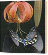 Two Spicebush Swallowtail Butterflies On A Turks Cap Lily Wood Print