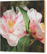 Two Striped Camellias Wood Print