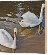 Two Swans On Spring Water Wood Print