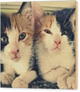 Two Tabby Cat Kittens Wood Print