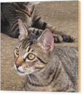Two Tabby Cats Wood Print