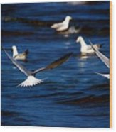 Two Terns A Fly Wood Print