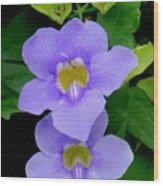 Two Thunbergia With Dew Drops Wood Print