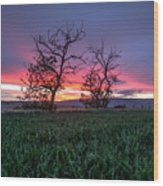 Two Trees In A Purple Sunset Wood Print