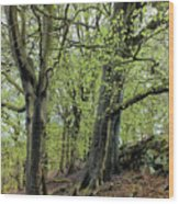 Two Trees In Springtime Wood Print