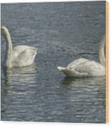 Two Trumpeter Swans At Oxbow Bend Wood Print