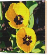 Two Tulips 2 Wood Print