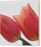 Two Tulips With Watercolour Effect Wood Print