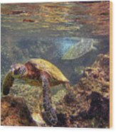 Two Turtles Wood Print by Bette Phelan