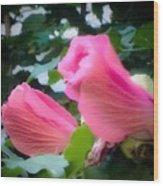Two Unopen Pink Hibiscus Flowers Wood Print