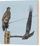 Two Views Of A Juvenile Bald Eagle Wood Print