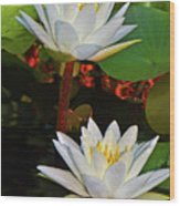 Two Water Lilies 004 Wood Print