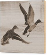 Two Winter Ducks In Flight Wood Print