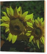 Two Yellow Beauties  Wood Print