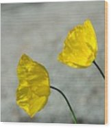 Two Yellow Blossoms Wood Print