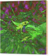 Two Yellow Frogs Wood Print